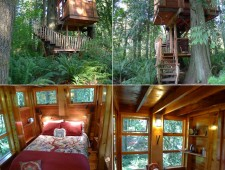 Tree-Houses-For-Adults-10