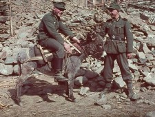 soldierpets13